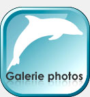 galerie photo nager avec les dauphins